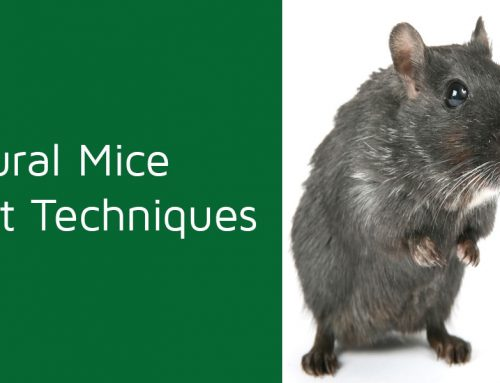 Natural Mice Repellent Techniques