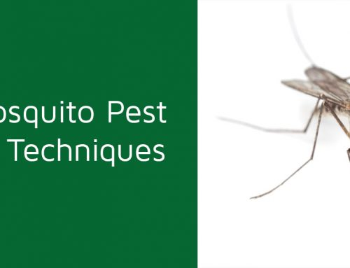 Best Mosquito Pest Control Techniques