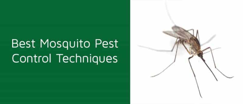 Best Mosquito Pest Control