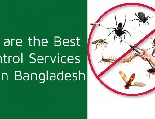 Why we are the Best Pest Control Services Provider in Bangladesh