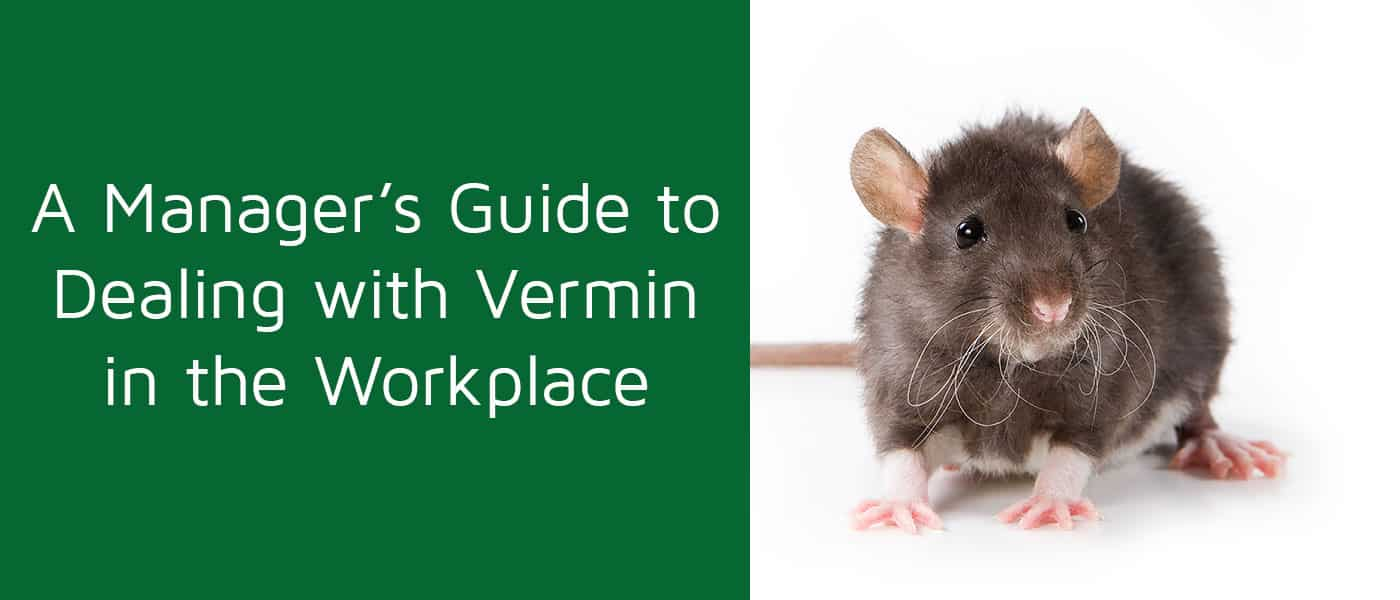 Guide to Dealing with Vermin in the Workplace