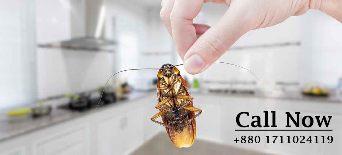 Cockroach Control
