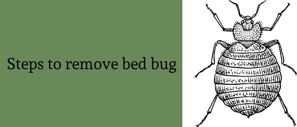 Steps To Remove Bed Bug