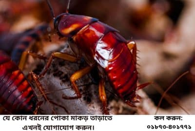 Cockroach Control Services in Bangladesh